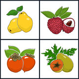 Papaya,  Persimmon, Quince,  Lichee Royalty Free Stock Photos