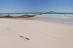 Papaya Playa Imágenes de archivo libres de regalías