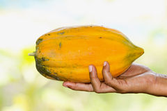 Papaya ripe. Fruits on hand Stock Photos