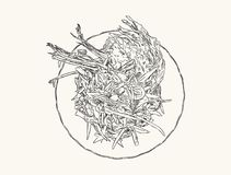 Papaya salad or som-tum , hand drawn sketch vector. Royalty Free Stock Photos