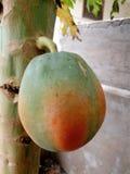 Papaya sin procesar Imagen de archivo