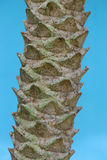 Papaya Tree Trunk Stock Images
