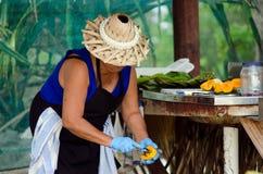 Papaya Tropical Fruit. RAROTONGA - SEP 17:Cook Islander woman prepare Papaya on Sep 17 2013.Papaya was reputably called the fruit of the angels by Christopher Stock Photo