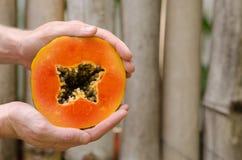 Papaya vändkretsfrukt, skiva, fred som är halv, händer royaltyfria foton