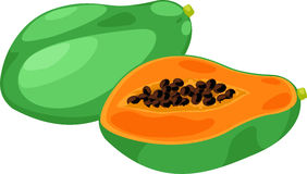 Papaya vector Stock Photography