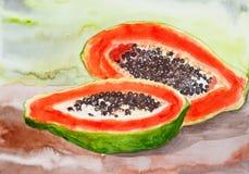 Papaya watercolor painted Stock Images