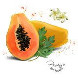 Papaya watercolor painting. White background royalty free illustration