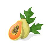 Papaya on white background. Vector illustration Royalty Free Stock Photography
