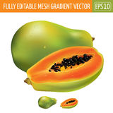 Papaya on white background. Vector illustration Royalty Free Stock Photos