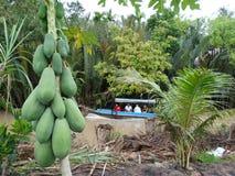 Papaya y barcos en campo del río Mekong, Vietnam, delta del Mekong Fotografía de archivo libre de regalías