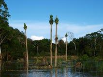 Papayaackerland überschwemmt durch Amazonas Lizenzfreie Stockfotografie