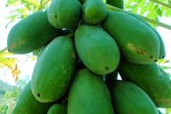 Papayafrüchte Lizenzfreies Stockfoto