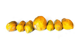 Papayas. Row of ripe and yellow papayas next to each other Royalty Free Stock Image