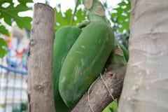 papaye Photographie stock libre de droits