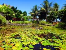 Papeete Tahiti Royaltyfria Foton