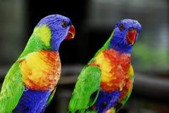 papegaai royalty-vrije stock foto