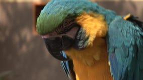 Papegaai stock videobeelden