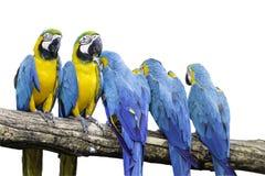 5 papegaai royalty-vrije stock afbeeldingen