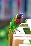 Papegaai 1 royalty-vrije stock fotografie