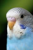 Papegaai Stock Afbeeldingen
