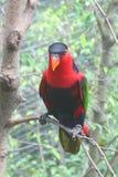 Papegaai stock afbeelding