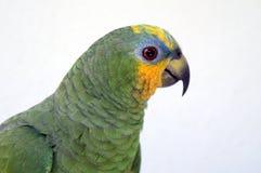 Papegaai Royalty-vrije Stock Afbeeldingen