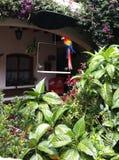 Papegaai buiten onder tropische installaties stock fotografie