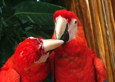 Papegaai in cancun stock foto
