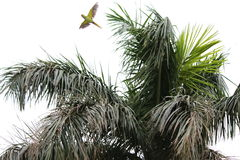 Papegaai die de hemel stijgen Stock Foto's