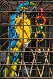 Papegaai in een kooi Stock Afbeelding