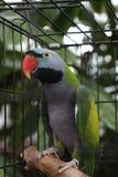 Papegaai in een kooi stock foto