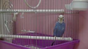 Papegaai in een kooi Volledige HD stock footage