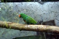 Papegaai in een vogelhuis Stock Afbeeldingen