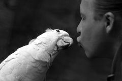 Papegaai en de man royalty-vrije stock fotografie
