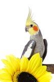 Papegaai en een bloem stock fotografie