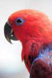 papegaai en fotograaf Royalty-vrije Stock Foto's