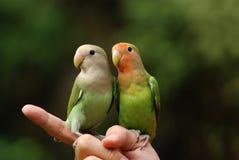 Papegaai en hand Royalty-vrije Stock Afbeeldingen