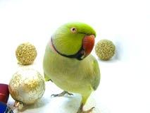 Papegaai en Nieuw jaar Stock Afbeelding