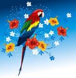 Papegaai en tropische bloemen Royalty-vrije Stock Fotografie