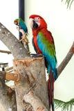 Papegaai in gevangenschap royalty-vrije stock afbeeldingen