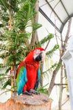 Papegaai in gevangenschap stock foto's