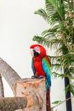 Papegaai in gevangenschap stock foto