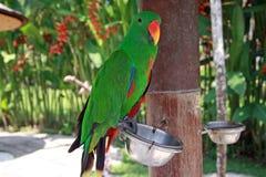 Papegaai in het park stock foto's