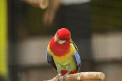 Papegaai in het Wildpark van Peking royalty-vrije stock afbeelding