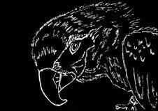 Papegaai hoofdvoering die op zwart document trekken royalty-vrije illustratie