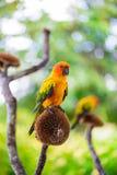 Papegaai, Kleurrijke papegaai, Arapapegaai, Kleurrijke ara Stock Afbeeldingen