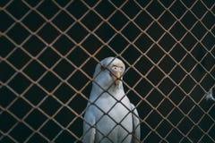 Papegaai in kooi royalty-vrije stock fotografie