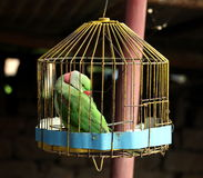 Papegaai in kooi royalty-vrije stock foto