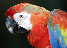 Papegaai in Kuala Lumpur Bird Park Stock Fotografie