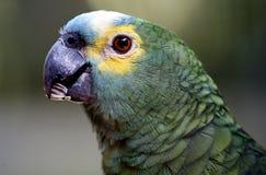 Papegaai in Kuala Lumpur Bird Park Stock Afbeeldingen